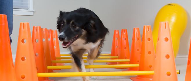 Palm Beach Off The Leash Dog Training