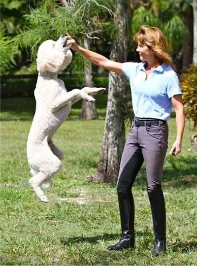 Marti poodle fizz jumping