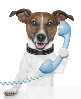 dog on phone