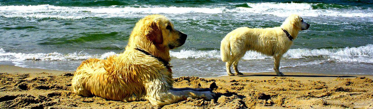 swimming_dogs_on_seaside